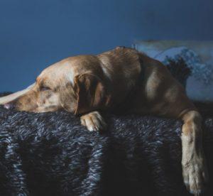 Best Travel Dog Beds
