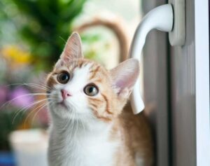 Cat Door Flaps Your Feline's Personalized Access To Home