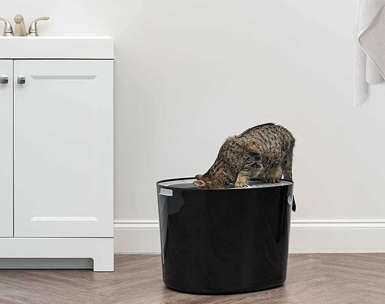 Cat Litter Boxes Your Guide To Buying One