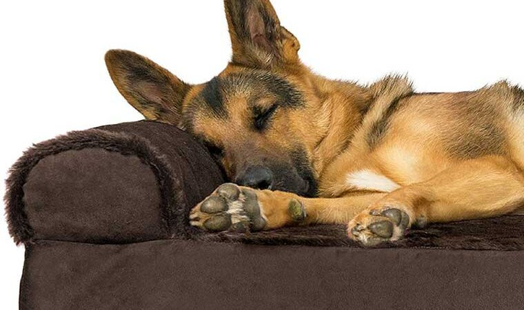 Choosing The Best XL Dog Bed