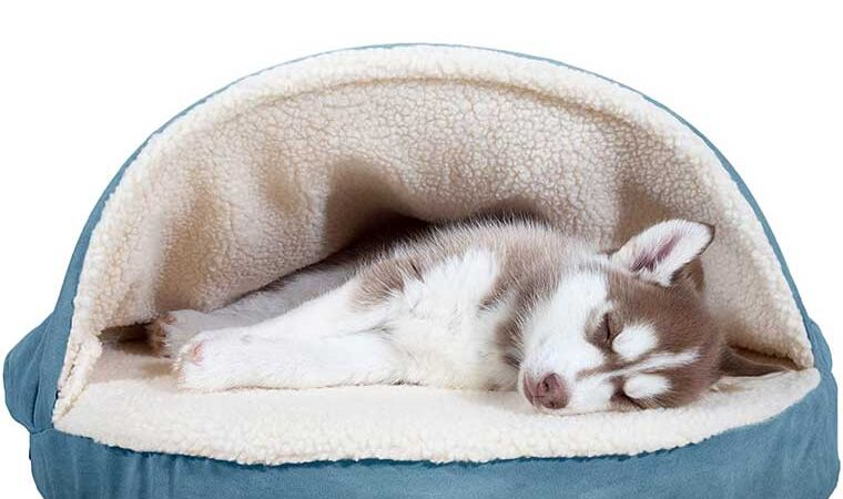 Dog Bed Hygiene Best Dog Beds With Removable Covers