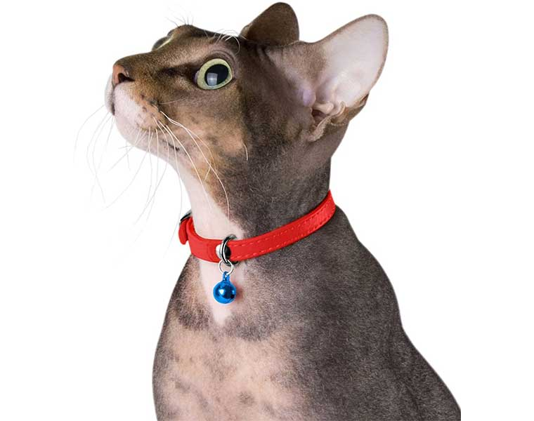 The Best Cat Collar In The Market - What Makes It The Best