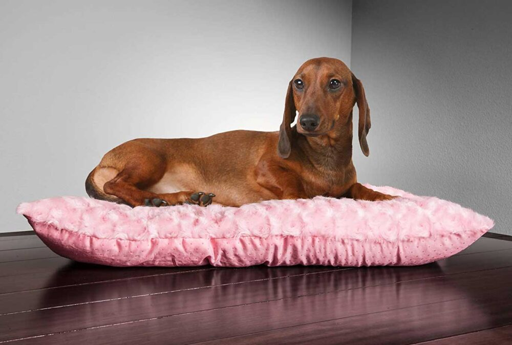 The Best Dog Beds Under 10 Dollars