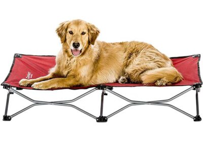 The Best Travel Dog Beds
