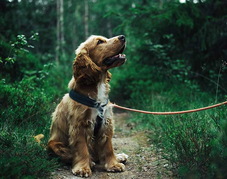 The Top 10 Gift Ideas For a Cocker-Spaniel Owner