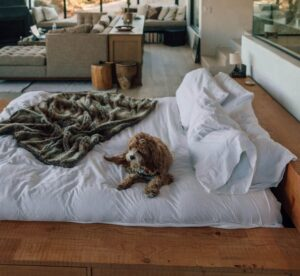 Is Memory Foam Good For Dogs?