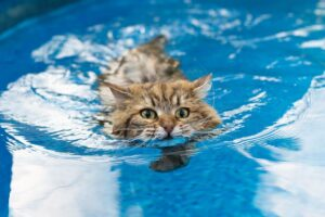 Do Cats Have The Ability To Swim?