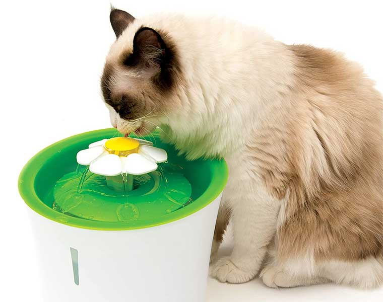 The Best Cat Water Fountain